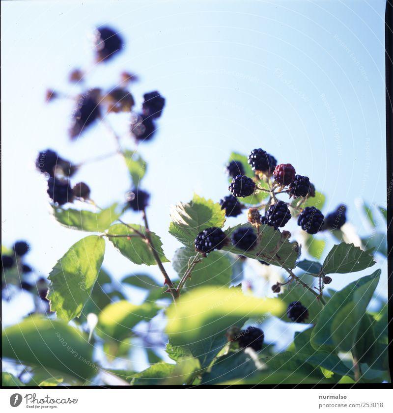 fruchtig Himmel schön Pflanze Sommer Blatt ruhig Tier Erholung Leben Umwelt Garten Blüte Glück Freizeit & Hobby Frucht Wachstum