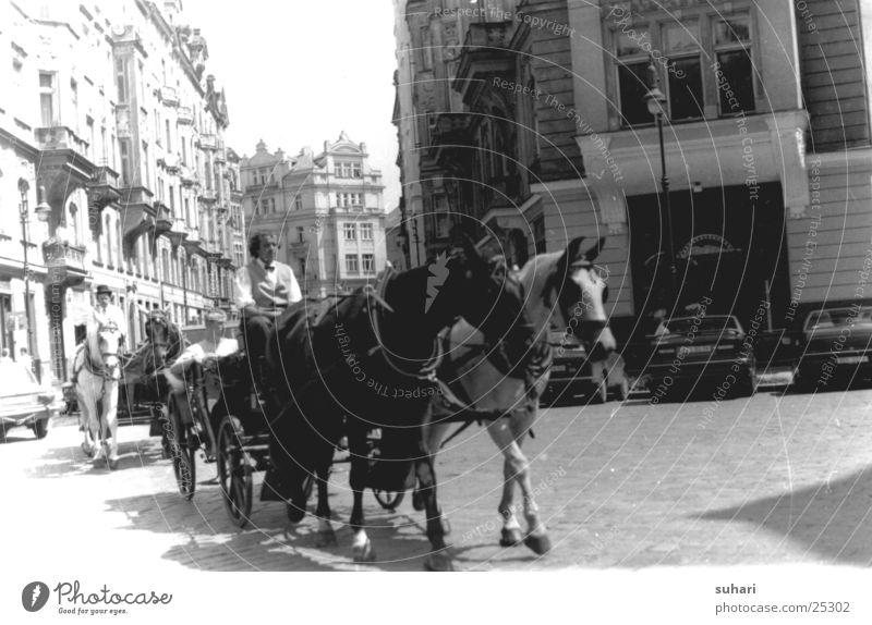 Prag Stadt Tschechien Fotolabor Pferd Pferdekutsche Europa Ferien & Urlaub & Reisen Schwarzweißfoto Straße
