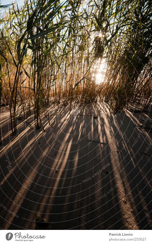 Daytrip Natur Pflanze Ferien & Urlaub & Reisen Sommer Strand Ferne Umwelt Freiheit Sand Küste Stimmung Erde Zufriedenheit Klima Ausflug Abenteuer