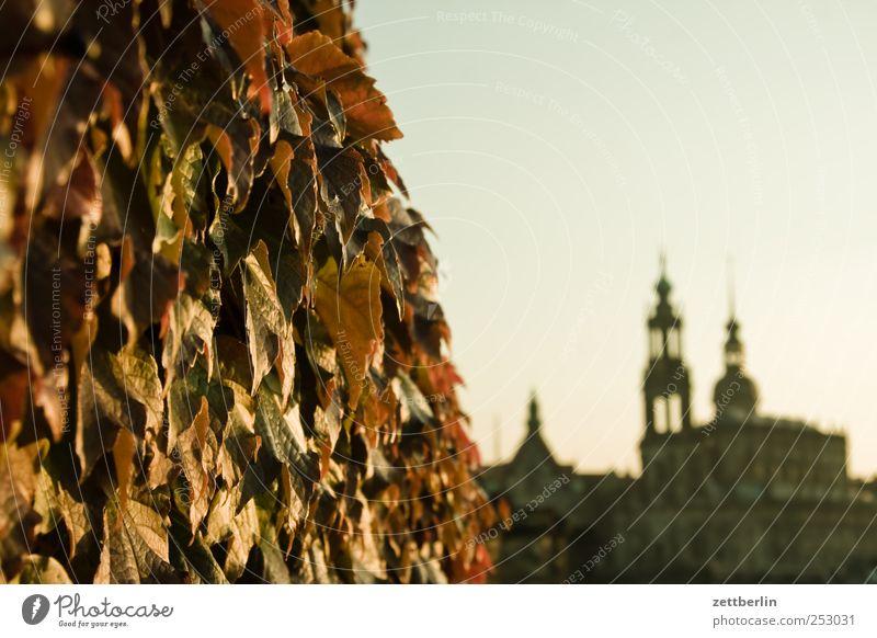 Herbst in Dresden Himmel Natur Stadt Pflanze Haus Herbst Umwelt Architektur Gebäude ästhetisch Kirche Dach Bauwerk Dresden Skyline Schönes Wetter