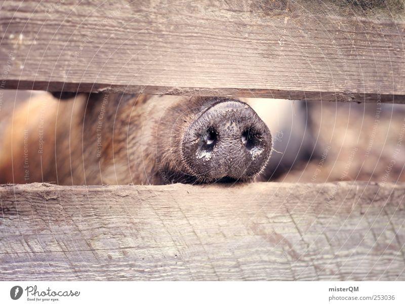 Reinschnuppern. Freiheit Glück Park Nase ästhetisch Zoo Zaun Fleisch Geruch gefangen Schwein Tierzucht Gehege Mensch Nasenloch Glücksbringer
