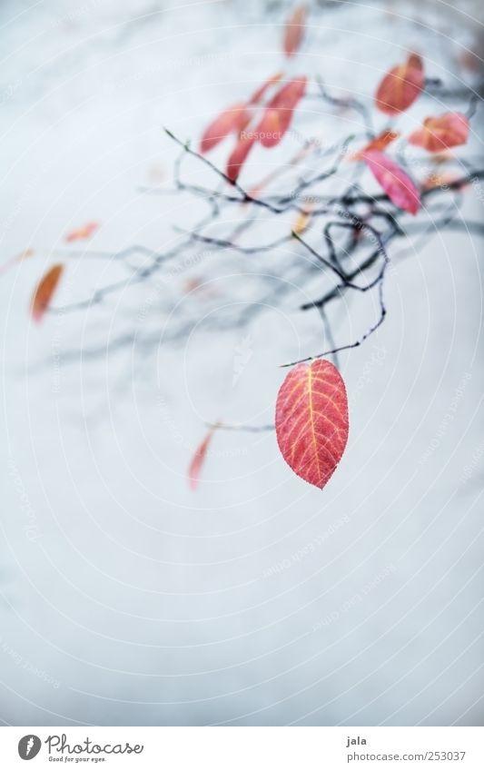 herbst Natur blau schön Pflanze rot Blatt schwarz Herbst Umwelt ästhetisch Ast