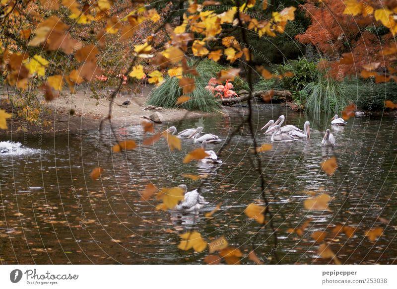 Herbstidylle Freizeit & Hobby Ausflug Umwelt Natur Landschaft Pflanze Tier Wasser Schönes Wetter Baum Blatt Garten Park Wildtier Vogel Flamingo Zoo Tiergruppe