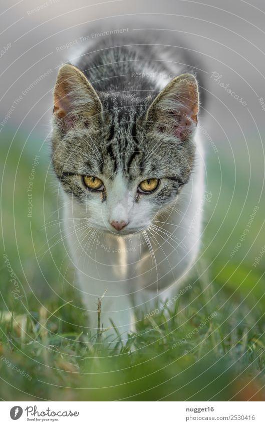 Ich will doch nur spielen ... Umwelt Natur Tier Sonnenlicht Frühling Sommer Herbst Schönes Wetter Gras Garten Park Wiese Haustier Katze Tiergesicht Fell Krallen