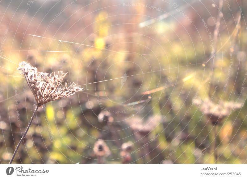 herbstlich Natur Pflanze Landschaft Blume Blatt Umwelt Wiese Herbst Gras Sträucher Schönes Wetter Warmherzigkeit Gelassenheit Spinne Grünpflanze Spinnennetz