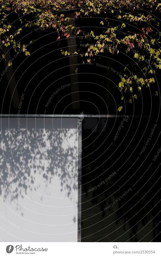 blätter Natur Herbst Schönes Wetter Pflanze Baum Blatt Menschenleer Haus Mauer Wand dunkel Stadt Farbfoto Außenaufnahme abstrakt Muster Textfreiraum rechts