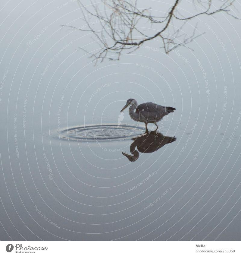 Und geschnappt Natur Wasser blau Tier Umwelt See Wellen Vogel natürlich Ast fangen Jagd Teich Fressen Reiher Graureiher