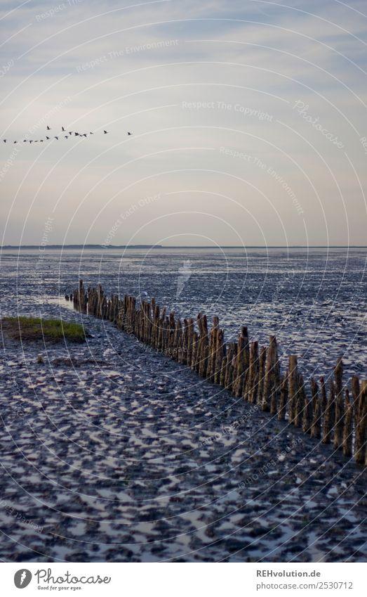Wattenmeer Ferien & Urlaub & Reisen Sommer Sommerurlaub Sonnenuntergang Strand Nordsee Meer Farbfoto Wellenbrecher Ebbe Himmel Vögel weite Horizont Ferne