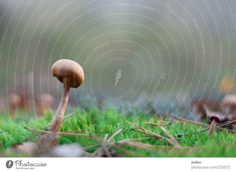schwammerl. Natur Pflanze 1 Ernährung Tod Lebensmittel Herbst Erde Angst Wachstum genießen Bioprodukte Pilz Gift schleimig zurückhalten