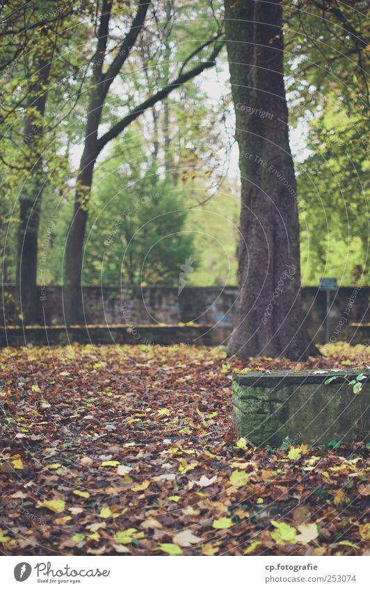 Fallout Baum Pflanze Blatt Herbst Mauer Park Wetter natürlich Grünpflanze