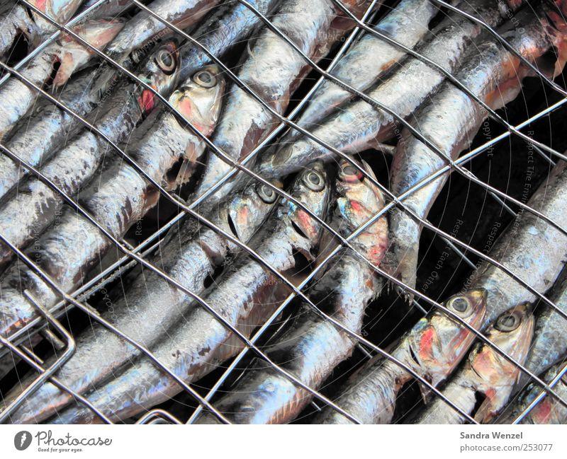 Grillsardinen Lebensmittel Fisch Meeresfrüchte Ernährung Mittagessen Abendessen Fingerfood Sushi Sardienen Grillgitter Tier Schuppen Aquarium Tiergruppe Schwarm