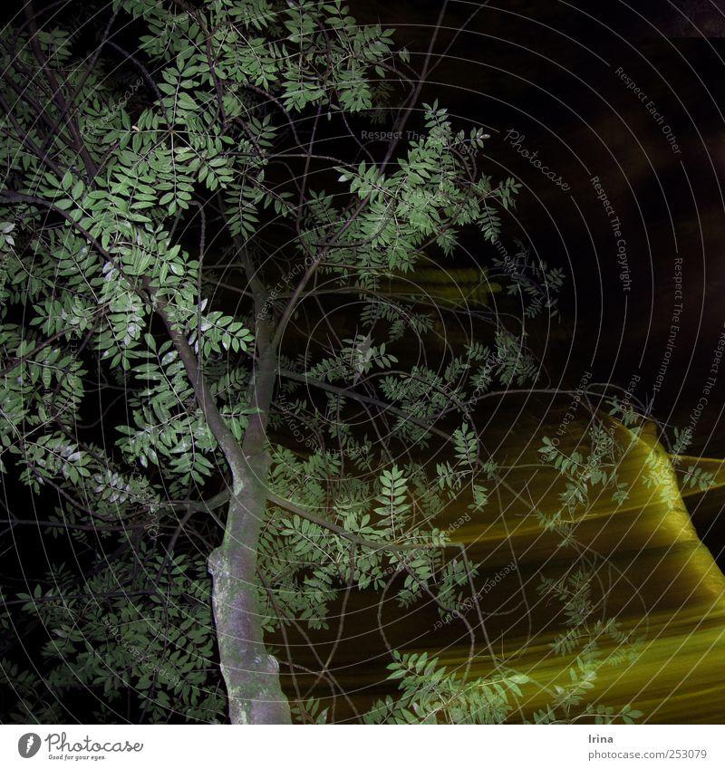Night Whoosh Baum Blatt Park Menschenleer dunkel gelb grün schwarz Bewegung Bochum Straßenbeleuchtung Licht Langzeitbelichtung Gedeckte Farben Außenaufnahme
