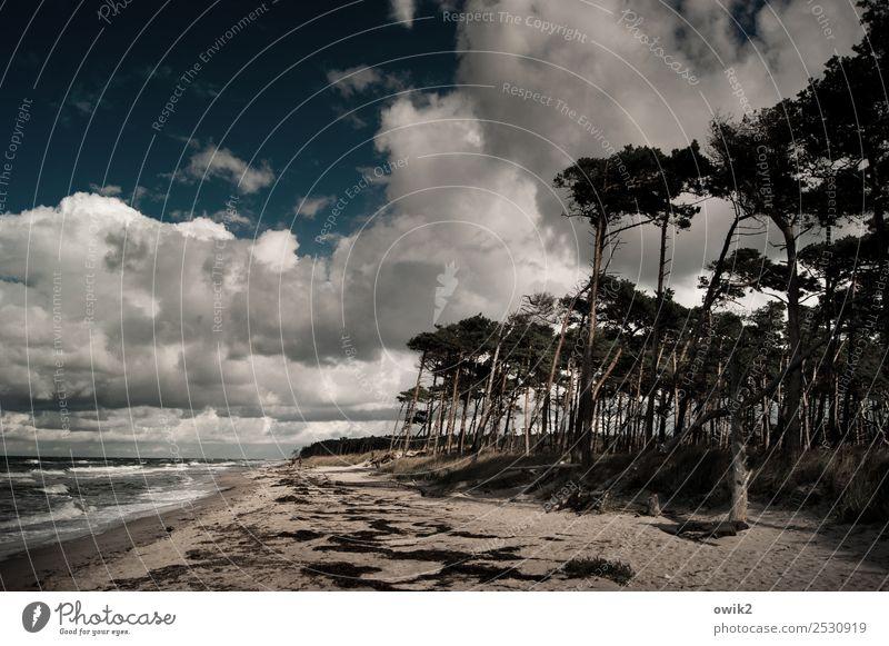 Darß im Dunkel Himmel Natur Pflanze Wasser Landschaft Baum Wolken Wald Strand Ferne dunkel Umwelt Herbst Küste Horizont Wellen