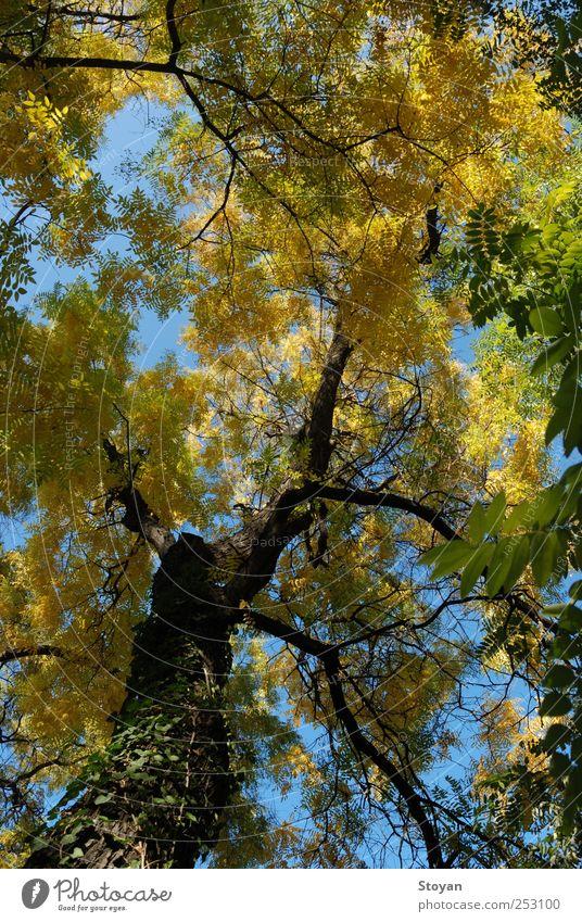 Himmel grün Baum Pflanze Blatt Ferne gelb Herbst Umwelt Landschaft Luft Wetter braun gold Erfolg authentisch
