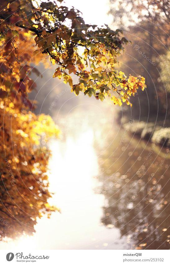 Good Morning Sun. Natur Pflanze ruhig Umwelt Landschaft Herbst Park gold natürlich ästhetisch Fluss Idylle Leipzig Herbstlaub herbstlich abgelegen