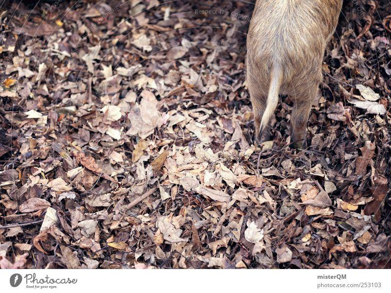 SAU! Natur schön Blatt Umwelt Landschaft Herbst klein ästhetisch Fell Zoo Herbstlaub Schwein herbstlich Viehzucht Herbstfärbung Herbstbeginn