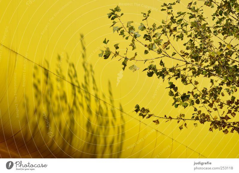 Litauen Umwelt Natur Pflanze Baum Hannover Bauwerk Gebäude Architektur natürlich gelb Farbfoto Außenaufnahme Menschenleer Licht Schatten