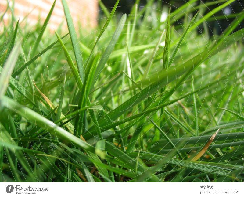 Gras grün Gras Frühling Wachstum nah Bodenbelag Reifezeit