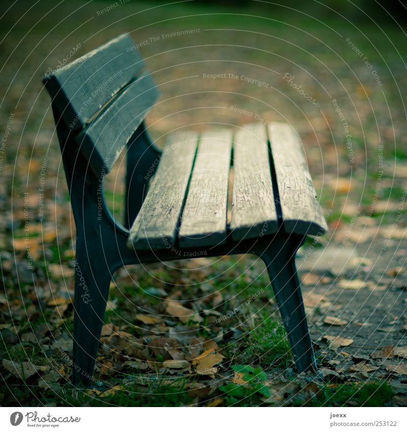 Bankenprofil Herbst Park Menschenleer alt braun grün schwarz Holzbank herbstlich Farbfoto Gedeckte Farben Außenaufnahme Tag Kontrast Schwache Tiefenschärfe