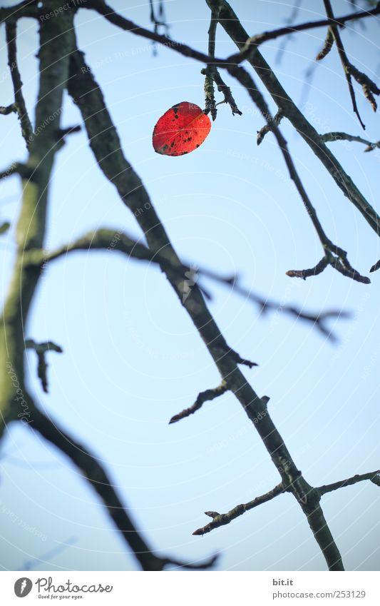 allein unter Zweigen... ruhig Meditation Ferien & Urlaub & Reisen Tourismus Umwelt Natur Himmel Herbst Winter Klima Pflanze Baum Blatt Garten kalt blau sparsam