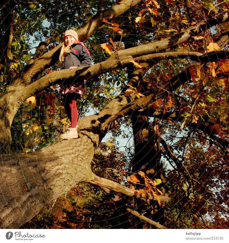 bis zum horizont und noch weiter Mensch Natur Baum Mädchen Pflanze Sonne Freude Blatt Tier Wald Leben Herbst Spielen Umwelt Landschaft Glück