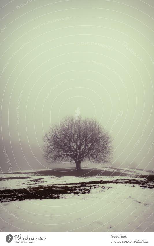 nebelheim Natur Baum Winter ruhig Einsamkeit kalt Wiese Schnee Umwelt Landschaft Eis Kraft Nebel Wachstum trist Wandel & Veränderung