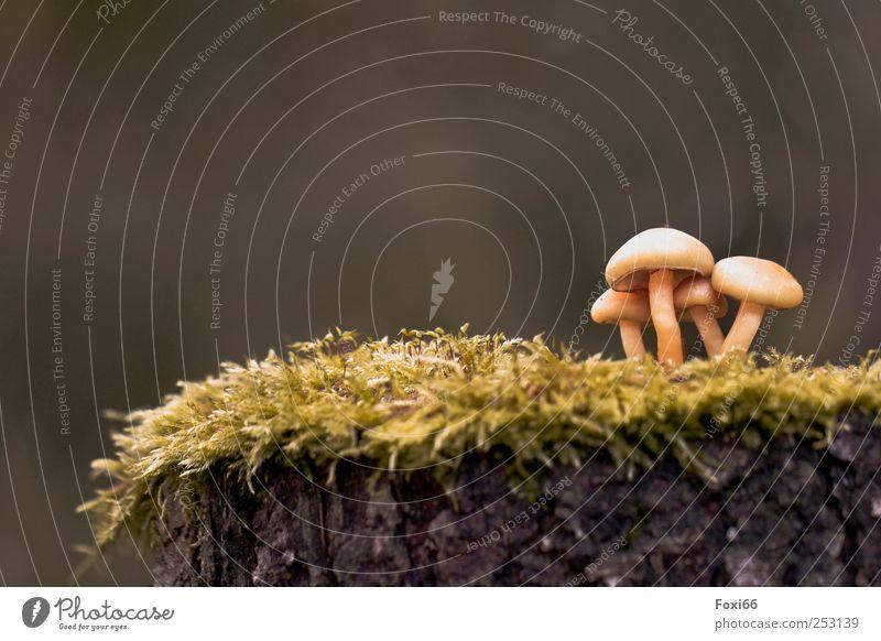 Es ist angerichtet Natur Herbst Baum Moos Wildpflanze Holz Pilze Zusammensein natürlich wild braun gelb grün Wachsamkeit Leben