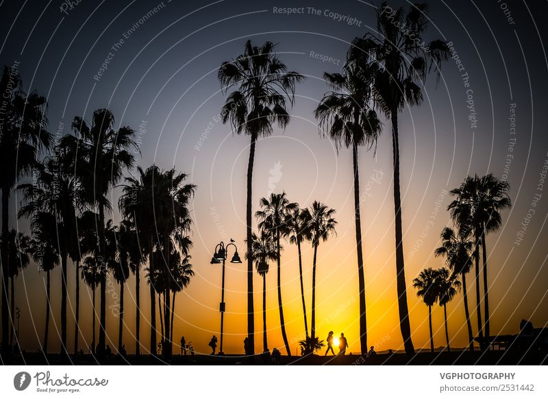 Sonnenuntergang in Venedig Ferien & Urlaub & Reisen Himmel Sonnenaufgang Frühling Schönes Wetter Blitze Wärme Baum Palme Park Küste Strand Stadt bevölkert Platz