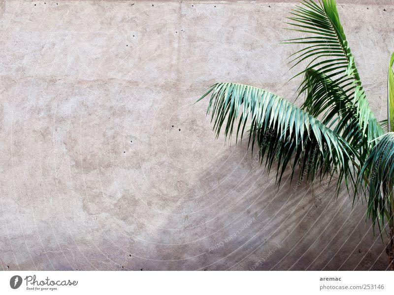 All Inclusive Pflanze Grünpflanze Palme Palmenwedel Mauer Wand Fassade exotisch Ferien & Urlaub & Reisen Farbfoto Gedeckte Farben Außenaufnahme Menschenleer