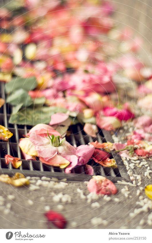 Hochzeitsüberreste grün weiß Blume Blatt gelb Blüte Stein Metall liegen rosa Beton Romantik Rose Reis Feste & Feiern Pflanze