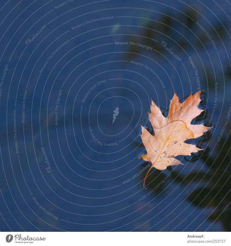 Eichenblatt Umwelt Natur Pflanze Wasser Herbst Baum Blatt Schwimmen & Baden Traurigkeit blau gelb Trauer Tod Fernweh Enttäuschung Einsamkeit Vergänglichkeit