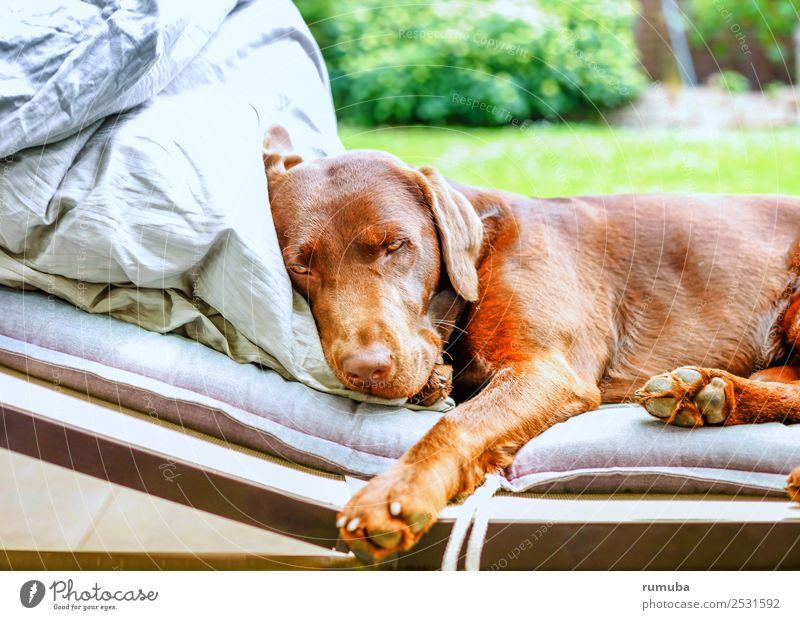 Einfach 'mal ausruhen. Ferien & Urlaub & Reisen Hund grün Erholung ruhig Garten Tourismus braun Zufriedenheit liegen genießen Schönes Wetter niedlich Coolness