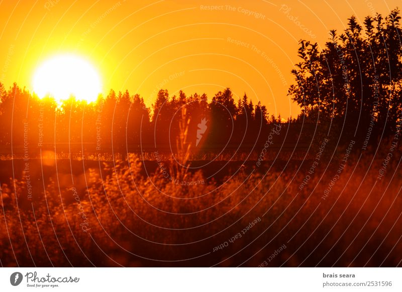 Sonnenuntergang über dem Wald schön Ferien & Urlaub & Reisen Tourismus Ausflug Sommer Berge u. Gebirge Sonnenenergie Umwelt Natur Landschaft Erde Himmel