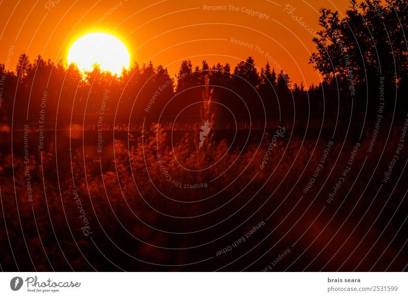 Sonnenuntergang über dem Wald schön Ferien & Urlaub & Reisen Tourismus Ausflug Sommer Berge u. Gebirge Natur Landschaft Himmel Horizont Herbst Baum Park Straße