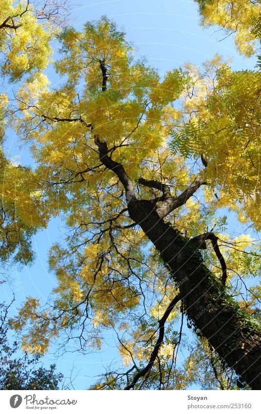 Der Herbst Umwelt Natur Landschaft Pflanze Luft Himmel Sonnenlicht Schönes Wetter Baum Sträucher Moos Blatt Wildpflanze Garten Park Feld Wald
