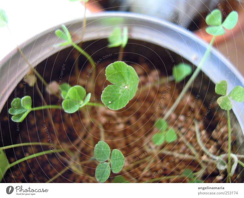 klein aber fein Pflanze Leben Sand Linie Wandel & Veränderung einzigartig Vergänglichkeit Inspiration Dose