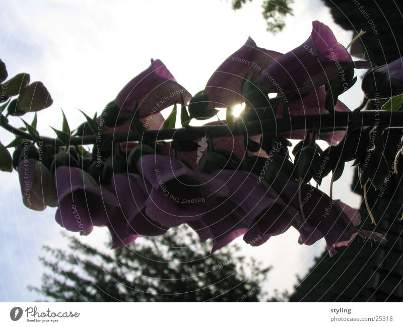 Schatten? Blume dunkel Blüte Beleuchtung