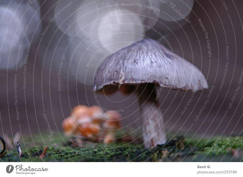 Pulk Natur grün grau Stimmung unten Pilz Moos Waldboden Reflexion & Spiegelung