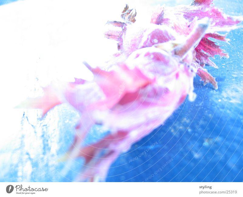 Nuss in Belichtung Natur blau Gesundheit Schönes Wetter