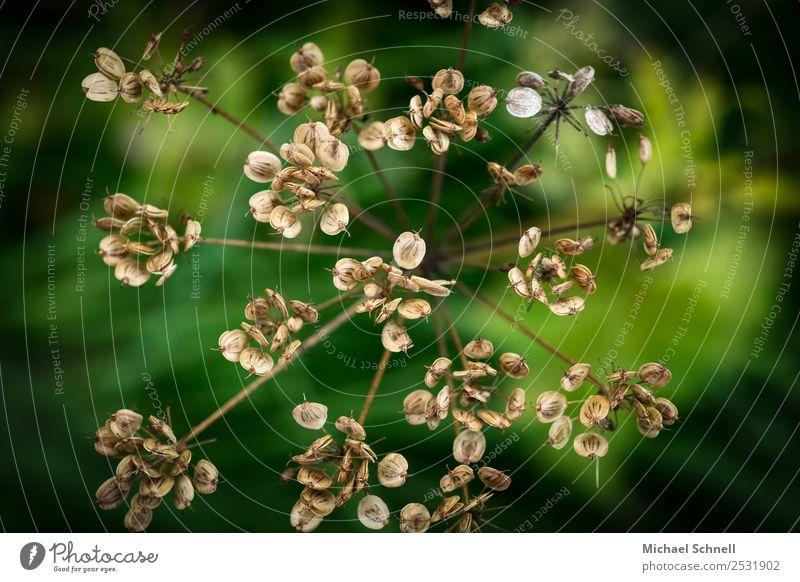 trocken Natur Pflanze grün Umwelt Blüte natürlich braun Sträucher Vergänglichkeit