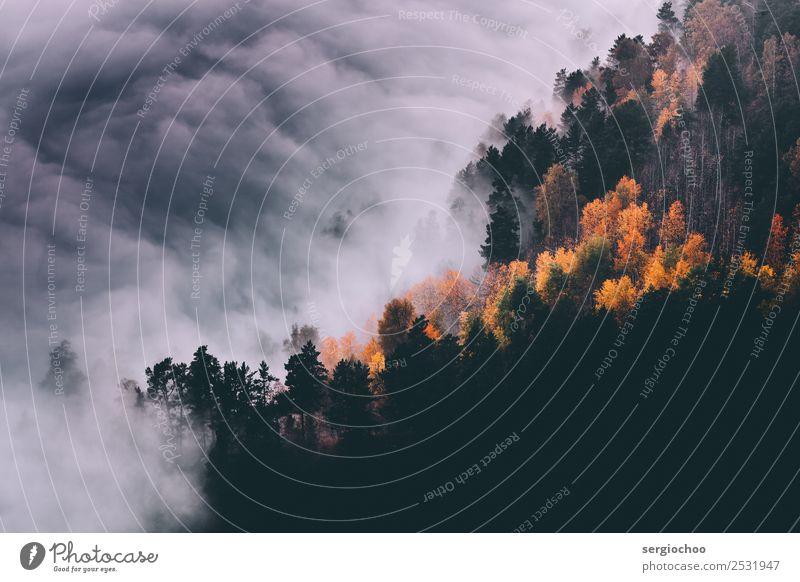 Herbst Herbst Natur Wolken Gewitterwolken Klimawandel schlechtes Wetter Nebel Baum Wald Hügel Berge u. Gebirge Bewegung Ferien & Urlaub & Reisen gigantisch