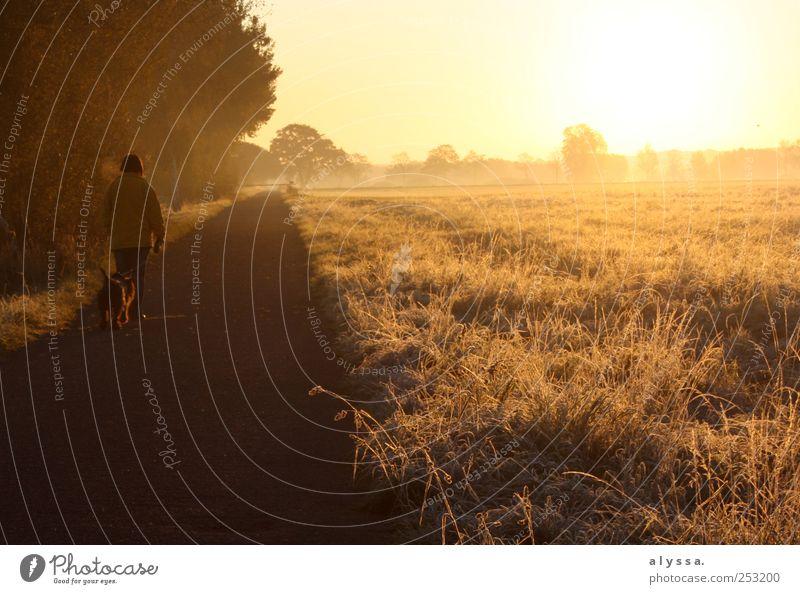 frostiger Sonnenaufgang. Mensch Natur Baum Pflanze gelb Herbst Landschaft Hund braun Sträucher