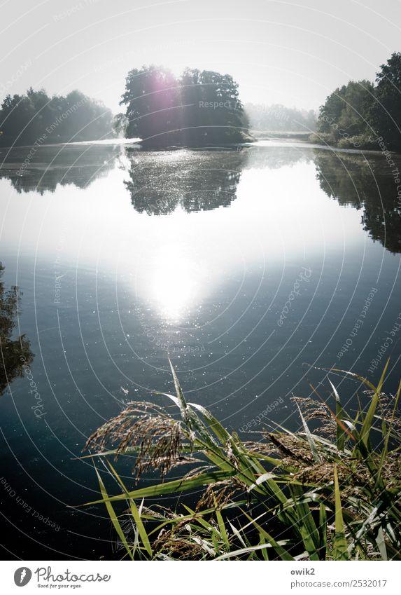 Waldsee Umwelt Natur Landschaft Pflanze Wasser Wolkenloser Himmel Horizont Sonne Schönes Wetter Baum Sträucher Röhricht Insel Teich See leuchten gigantisch