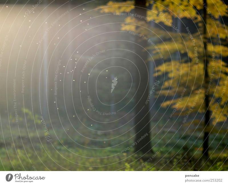 abschiedstanz Natur Pflanze Wald gelb Herbst Glück Romantik Vergänglichkeit Warmherzigkeit Momentaufnahme Abschied Stechmücke Buche gelbgold