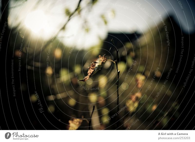 lost station Natur Pflanze Herbst Schönes Wetter Baum Sträucher Blatt Bahnhof Bauwerk alt außergewöhnlich dunkel wild Menschenleer trocken herbstlich Einsamkeit