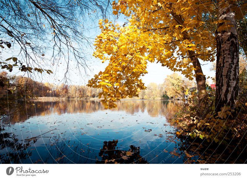 Herbstsee Umwelt Natur Landschaft Wasser Baum Blatt Seeufer schön gelb Idylle Herbstlaub Herbstbeginn November Wasseroberfläche Baumkrone Zweig Birke herbstlich