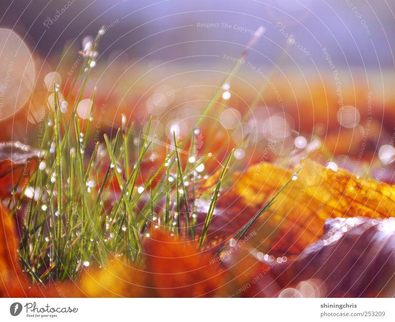 sunshine fills my hair and dreams hang in the air Natur Blatt ruhig Wiese Herbst Garten Erde glänzend Beginn Wassertropfen Lebensfreude Halm Tau