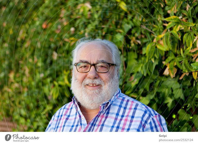 Porträt eines älteren Mannes mit weißem Bart im Garten Lifestyle Glück Gesicht ruhig Freizeit & Hobby Sommer Ruhestand Mensch Erwachsene Großvater Natur Park