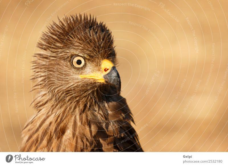 Natur schön weiß Tier Freiheit Vogel wild elegant Europa Feder Flügel niedlich Fotografie Beautyfotografie Europäer Schnabel
