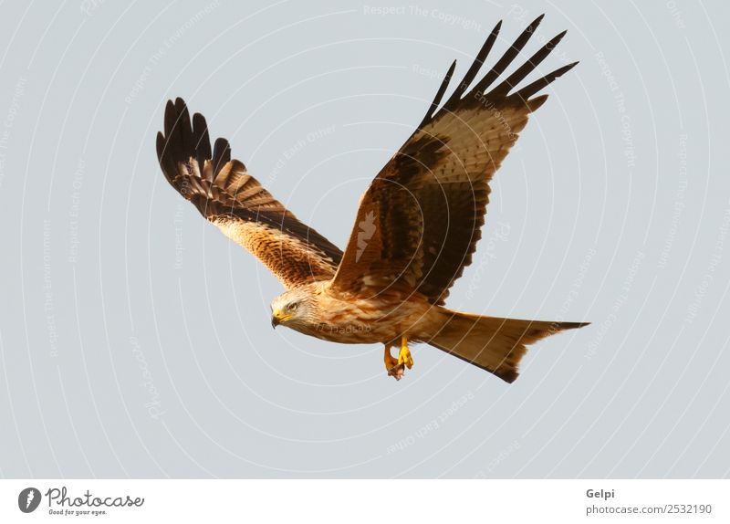 Himmel Natur blau weiß Tier Vogel fliegen wild gold Feder Geschwindigkeit Flügel Spanien Etage Schnabel Wildnis